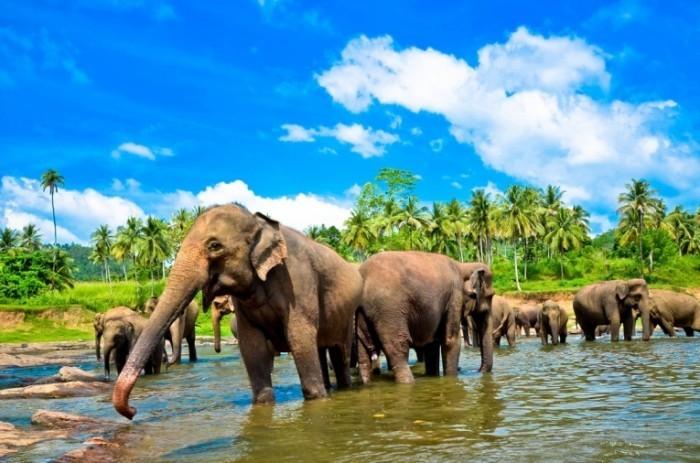 shutterstock 128294927 sm 700x463 Слоны   Elephants