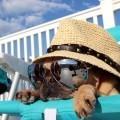 Собака в шляпе и очках - Dog in a hat and sunglasses