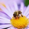 Пчела на цветке - Bee on flower