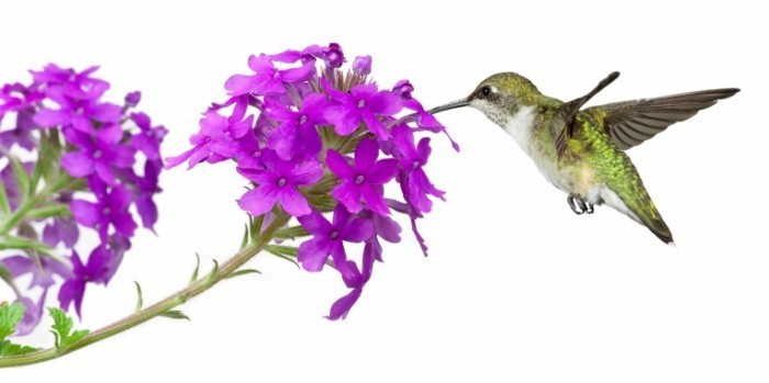 shutterstock 59296810 700x349 Цветок и птичка   Flower and bird