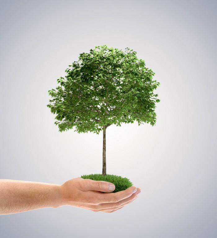 Fotolia 41560854 Subscription Monthly L 700x766 Дерево в руках   Tree in hands