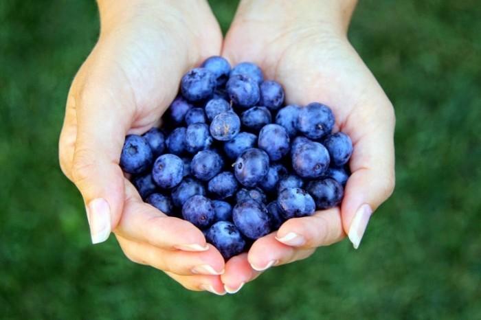 Fotolia 51162551 L 700x466 Черника   Blueberries
