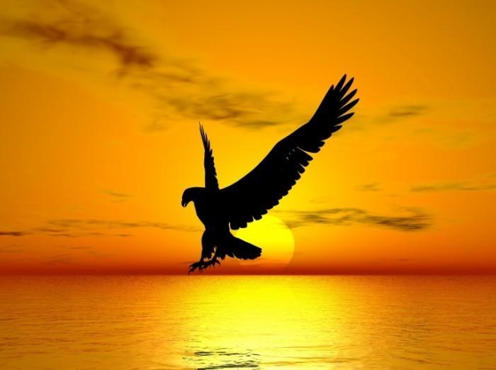 dreamstime l 2815032 700x522 Орел   Eagle