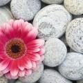 Цветок в камнях - Flower in rocks