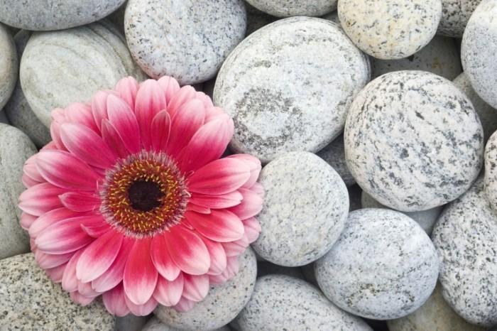 istock 000003112601xlarge 700x466 Цветок в камнях   Flower in rocks