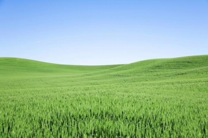 istock 000006707654xxlarge 700x466 Красивая поляна   Beautiful meadow