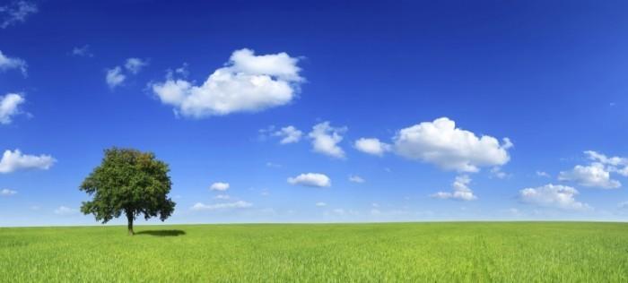 istock 000007201305xxlarge 700x316 Пейзаж поляна с деревом   Landscape with a tree meadow