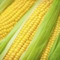 Кукуруза - Corn