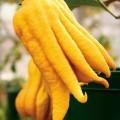 Желтый перец - Yellow pepper