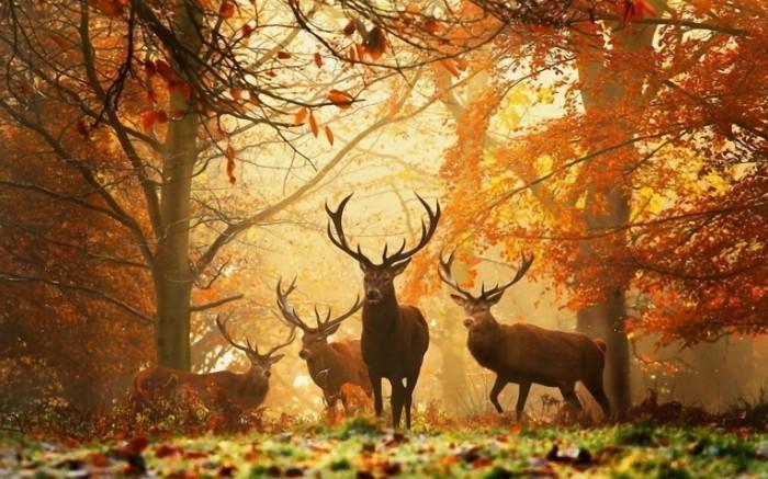 130145974 700x437 Олени   Deer