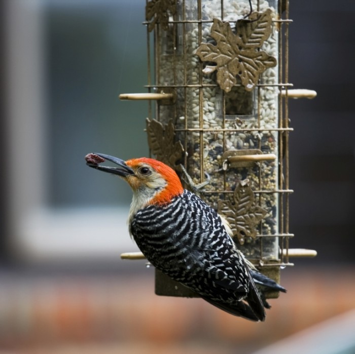 Woodpecker2 istock06128980 700x699 Птица на дереве   Bird on the tree