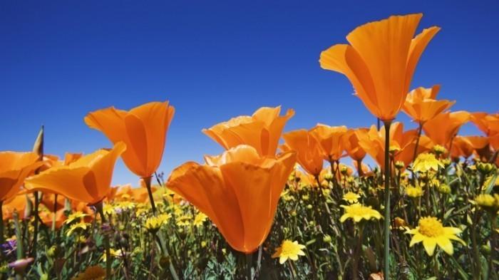 a13f895e0abe28c6472003d7edba1a00 700x393 Цветы   Flowers