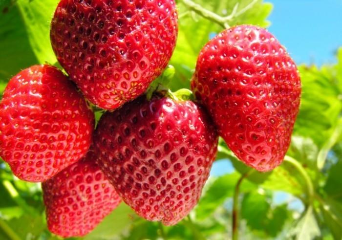 beauty foods strawberries ss 700x491 Клубника   Strawberry