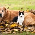 Собака и кошка - Dog and cat