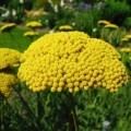Желтые цветы - Yellow flowers