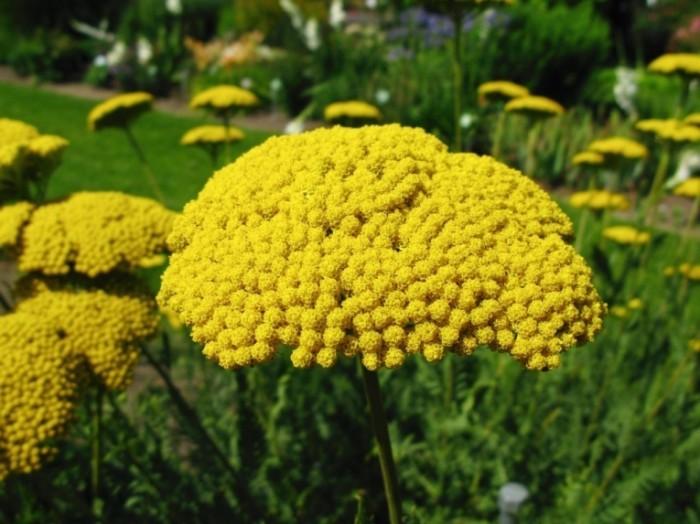 Желтые цветы   Yellow flowers