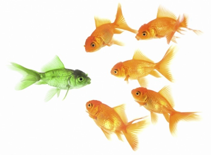 istock 000006450448medium13 700x516 Рыбы   Fish