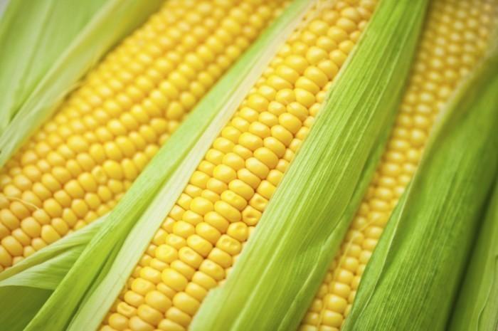 istock 000017329100large 700x465 Кукуруза   Corn