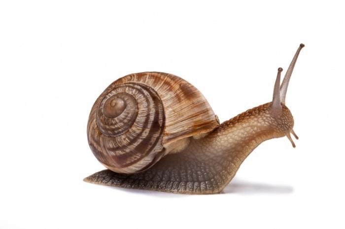 snail 700x466 Улитка   Snail