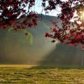 Осенний день - Autumn Day
