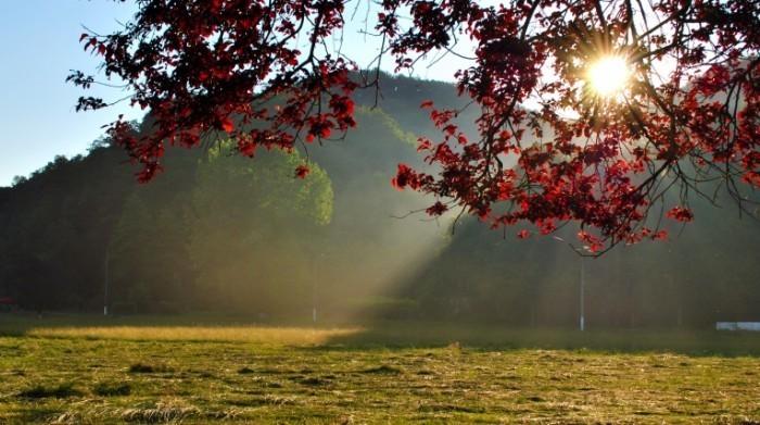 1359720 95566863 autumn tree stock xchng 700x391 Осенний день   Autumn Day