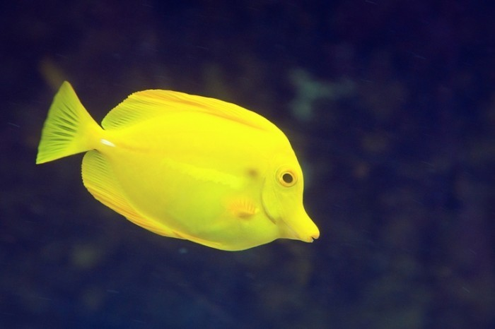 IMG 9300 700x466 Рыба   Fish