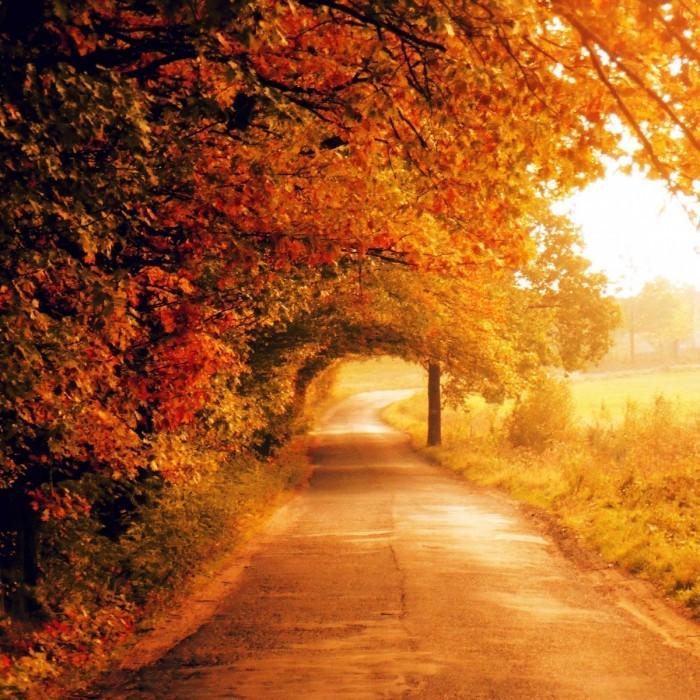 autumn 7 by all17 700x700 Осень   Autumn