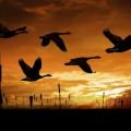 Птицы в небе - Birds in the sky