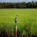 Аист - Stork