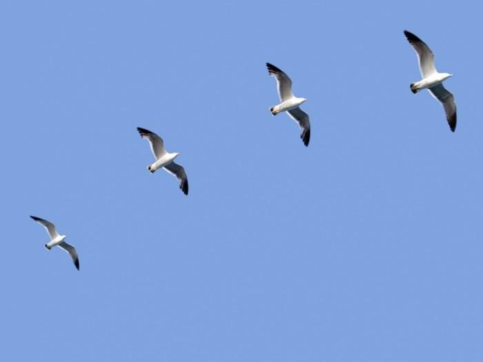 iStock 000004170704Medium 700x524 Птицы в небе   Birds in the sky