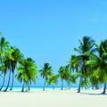 Берег с пальмами - Beach with palm trees