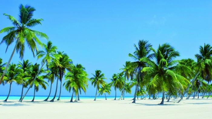 istock 000004789493large 700x393 Берег с пальмами   Beach with palm trees