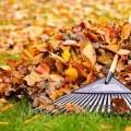 Грабли с листьями - Rake leaves
