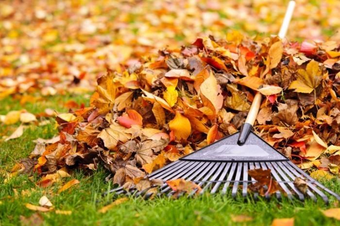 istock 000022248074large 700x465 Грабли с листьями   Rake leaves