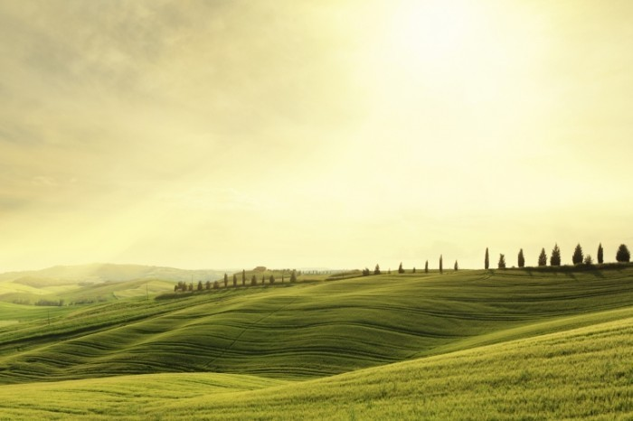 istock 000024510285large green landscape toscany 700x466 Долина   Valley