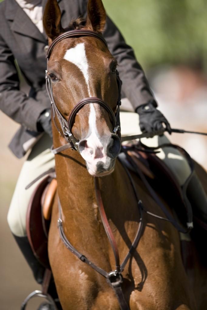 istock having fun 682x1024 Лошадь   Horse