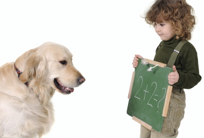 math dog iStock 000005304730Medium 700x475 Мальчик с собакой   Boy with a Dog