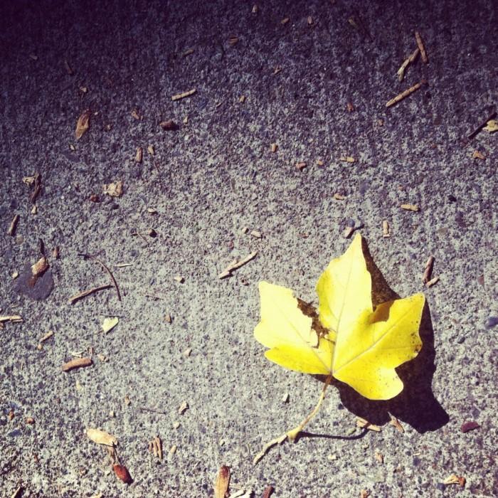 2012 10 04 12.57.35 700x700 Кленовый лист   Maple Leaf