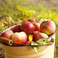 Яблоки в ведре - Apples in a bucket