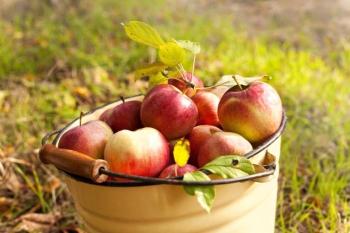 Dollarphotoclub 60821762 700x466 Яблоки в ведре   Apples in a bucket