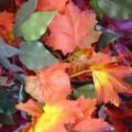 Разноцветные листья - Colorful leaves