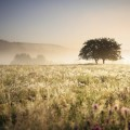 Засохшая пустыня - Dried desert