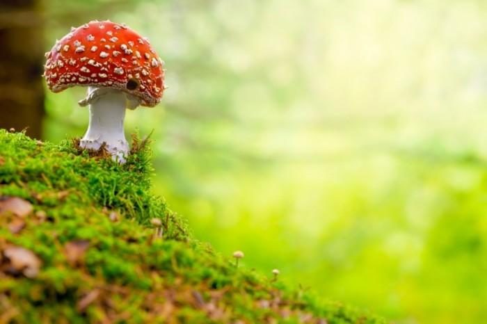 Dollarphotoclub 44702837 700x466 Гриб   Mushroom