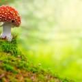 Гриб - Mushroom