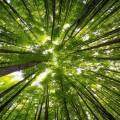 Деревья в лесу - Trees in the forest