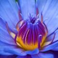 Синий цветок - Blue flower
