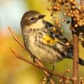 Птичка на ветке - Bird on a branch