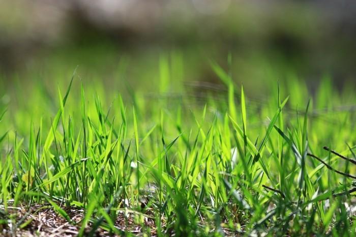 Dollarphotoclub 93552073 700x466 Трава   Grass
