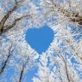 Сердце из веток деревьев - Heart of tree branches