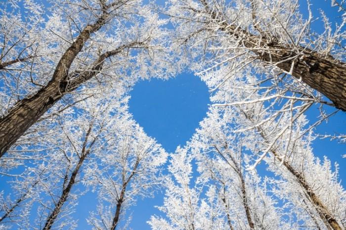 shutterstock 133014554 700x465 Сердце из веток деревьев   Heart of tree branches
